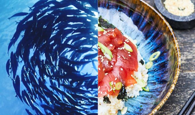 bowl tonno ricetta