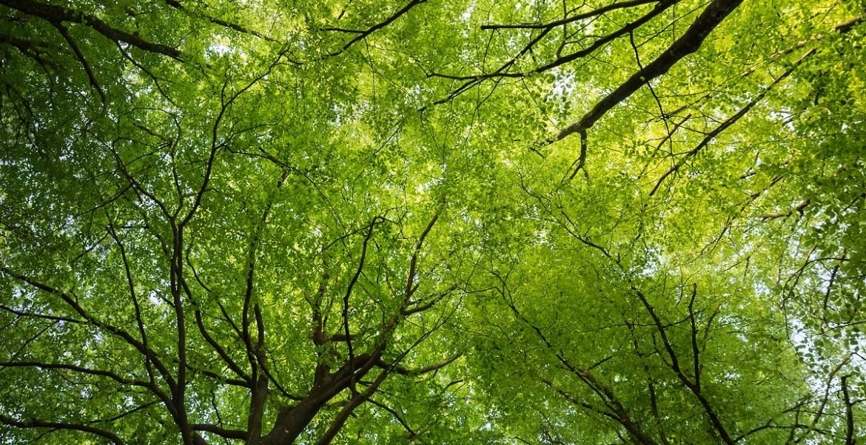 Yves Rocher alberi